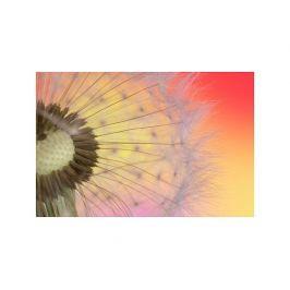 Tištěný obraz - Pampeliška