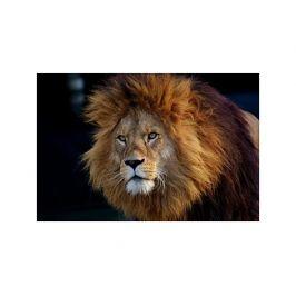 Tištěný obraz - Král